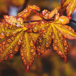 orange leafs n.jpg