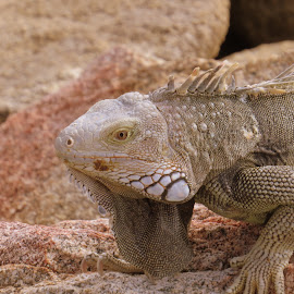 by Steve Tharp - Animals Reptiles