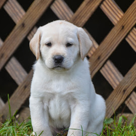 by Rob Ebersole - Animals - Dogs Puppies