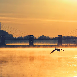 Morning by the bridge by Michal Fokt - Buildings & Architecture Bridges & Suspended Structures ( bird, bridge, morning )