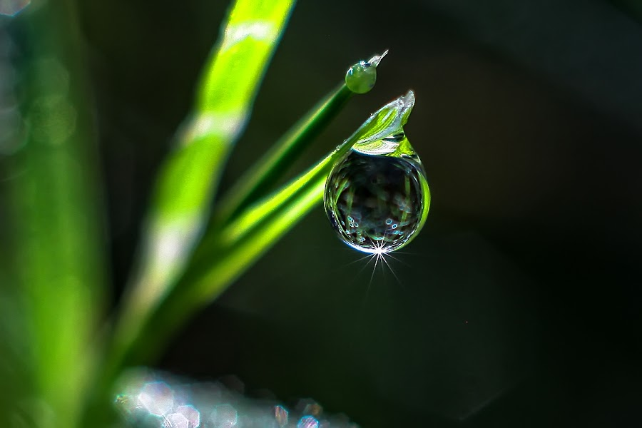 natural dew.... by Kawan Santoso - Nature Up Close Natural Waterdrops