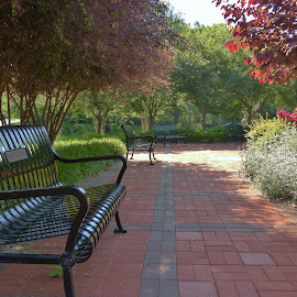 Park in Charlotte N.C by Gilman Michaud - City,  Street & Park  City Parks