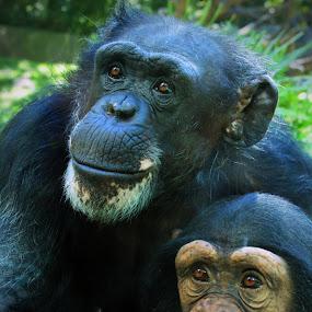 by John Ireland - Animals Other Mammals