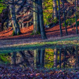 by Johannes Mikkelsen - Landscapes Forests