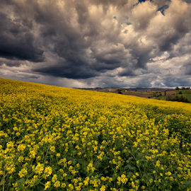 Heavy Clouds by Maurizio Martini - Landscapes Cloud Formations ( plant, nobody, copy space, concept, land, yellow, landscape, spring, crop, blossom, farm, pasture, sky, napus, nature, fresh, oilseed, dramatic, ecology, gold, flower, calendar, canola, grass, texture, green, minimalism, beautiful, agriculture, bloom, scenic, rural, field, rapeseed, organic, colza, environment, season, blue, outdoor, background, meadow, summer, scene, cultivated, day, vegetable, growth,  )