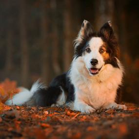 by 'Monique Smit - Animals - Dogs Portraits