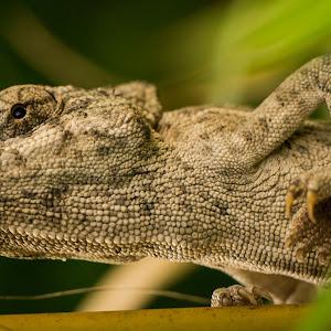 chameleon - 2012-07-15-18-57-55-2.jpg