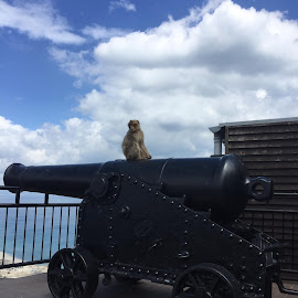 Gibraltar Ape by Amber O'Hara - Landscapes Travel