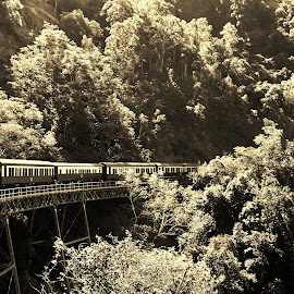 Kuranda Scenic Railway by Sarah Harding - Novices Only Landscapes ( railway, outdoors, novices only, train, travel )