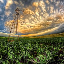 by DE Grabenstein - Landscapes Prairies, Meadows & Fields