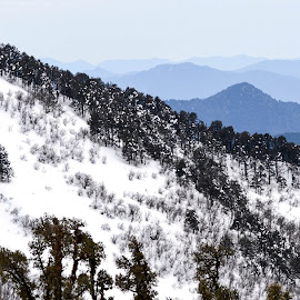 Snow and Trees by V Naveen Kumar - Landscapes Mountains & Hills ( hills, mountains, snow )