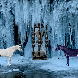 white horse,black horse by Diego Iaconfcic - Digital Art Animals ( horses )