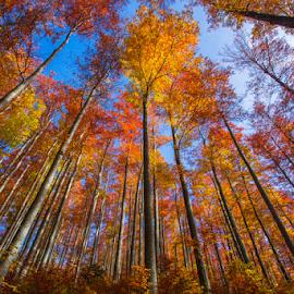 by Stanislav Horacek - Landscapes Forests