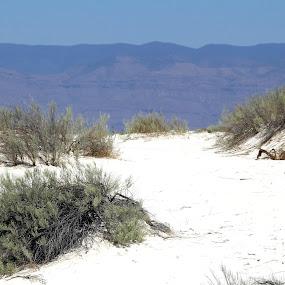 Desert sand by Keysha Wallace-Patton - Nature Up Close Sand