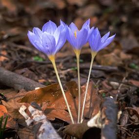 by Estislav Ploshtakov - Flowers Flowers in the Wild