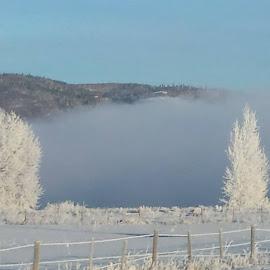 winter wonderland by Tammy Ellingson - Landscapes Weather