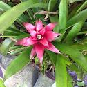 Unknown Spotting ( Flower )