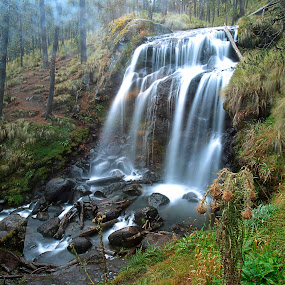 Forest and waterfall by Cristobal Garciaferro Rubio - Landscapes Forests ( water, mountain, waterfall, pine trees, pine )