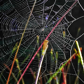 Spider Web 5 by Dee Haun - Nature Up Close Webs ( spider web, nature up close, 180613t2648c3e5, iphone,  )