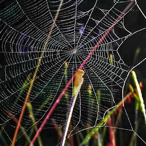 180613t2648c3e5_Spider Web.jpg