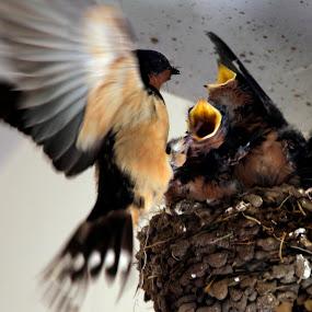 hello kids by Cristobal Garciaferro Rubio - Animals Birds
