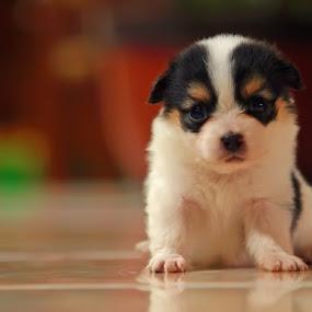 Lovely Dog by Prana Jagannatha - Animals - Dogs Portraits ( pet, dog, animal )