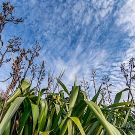 Natural Plant by Loh Jiann - Landscapes Prairies, Meadows & Fields ( sky, nature, flora, landscape, leaves )