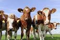 landbruksdebatt & komla