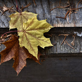 Autumn by Rod Tydeman - Nature Up Close Leaves & Grasses