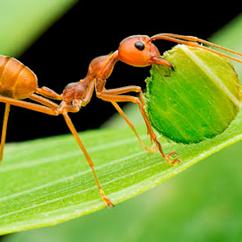 ANT150327C by Carrot Lim - Animals Insects & Spiders