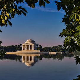 Jefferson Memorial by Kimberly Sharp - Buildings & Architecture Statues & Monuments ( green, color, reflection, pinks, natural light, iconic, historical, water, blues, tidal basin, washington dc, white, waterscape, jefferson memorial, memorial, landscape )
