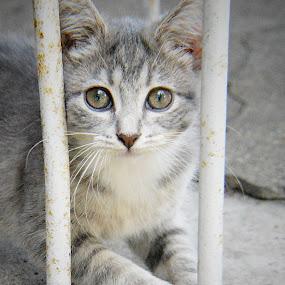 Relaxing by Benny Lopez - Animals - Cats Kittens ( kitten, relaxing, running, porch )
