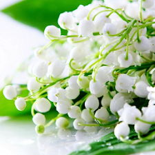 Lily of the valley Wallpapers