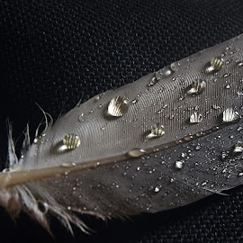 Feather touch 2 by Pradeep Kumar - Nature Up Close Natural Waterdrops