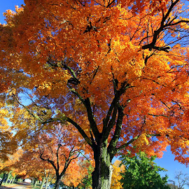 by Dan Doran - Nature Up Close Trees & Bushes