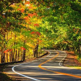 Sunday Drive by Sandra Hilton Wagner - Transportation Roads ( winding, autumn, trees, travel, road, landscape, leaves )