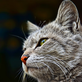 by Veeresh Pathania - Animals - Cats Portraits