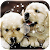 Cute Puppy Lock Screen file APK for Gaming PC/PS3/PS4 Smart TV