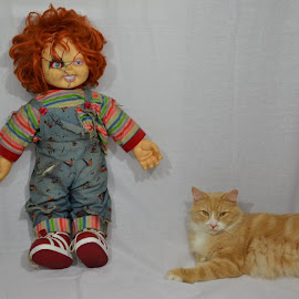 Chuck and Chucky hanging out by Dean Germann - Animals - Cats Portraits ( wild, cat, doll, portrait, animal )