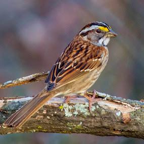 little me by Darrin Halstead - Animals Birds ( bird, wildlife,  )