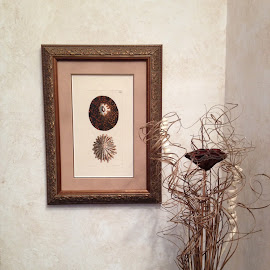 Little Art Corner by John O'Connell - Novices Only Objects & Still Life ( sea shells, corner, framed art, display, print )