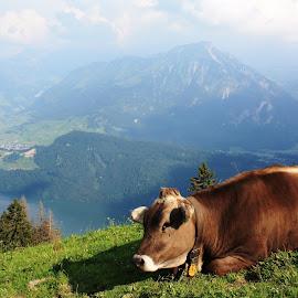 Alpok by Nagy Attila - Landscapes Travel ( 123 )