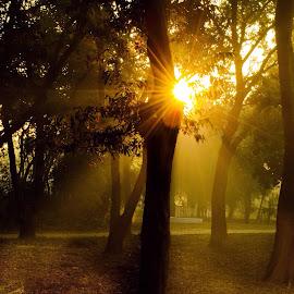 Morning light  by Ayush Phillip - Nature Up Close Gardens & Produce ( sunlight, sunrise, natural beauty, nature, natural light, natureza, travel,  )