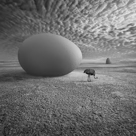 EggO by Dariusz Klimczak - Digital Art Animals ( clouds, sand, dunes, monochrome, klimczak, egg, kwadrart, bird, fantasy, story, sky, wetlands, square, surreal, mono )