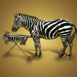 Zebra and iron t-shirt for randevouz .... by Pete Schmit - Digital Art Animals