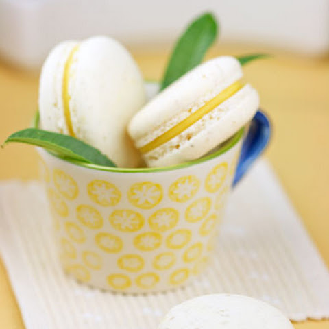 Italian Meringue Macarons with Lemon Verbena Ganache