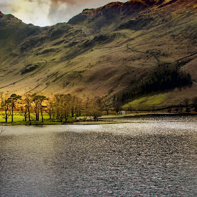 Buttermere Pines by Stephen Hooton - Landscapes Waterscapes ( lakes, places )