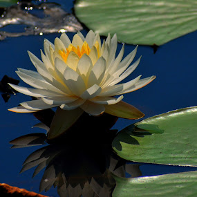 by Bill Martin - Flowers Flowers in the Wild ( color, reflection )