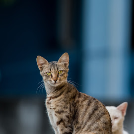 The Couple by Naveen Joyous - Animals - Cats Portraits ( cats, pets, couple, portrait, animal )