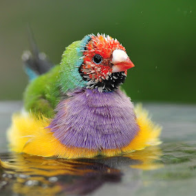 Bath time by Joe McBroom - Animals Birds